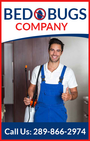 Bed Bugs Company